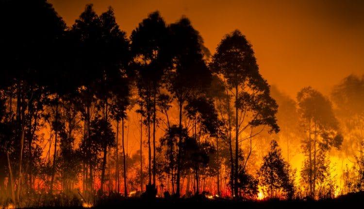 A Floresta Amazônica está pegando fogo e a fumaça pode ser vista do espaço